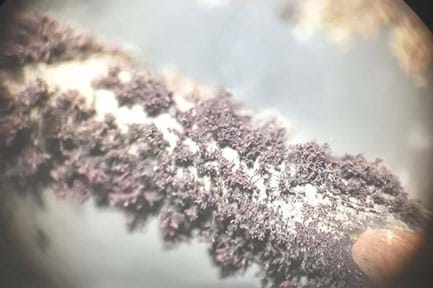 Photo of silver dendrites formed on a copper wire at 30x magnification. A green powder, copper(II) nitrate, is visible around the dendrites.