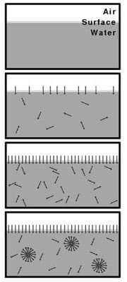 A four-panel diagram shows an air and water interface. The top panel has no surfactant, only pure water. The next panel shows surfactant sparsely covering the surface. The third panel shows the surface completely filled with surfactant molecules. The final panel shows additional surfactant forming spherical micelles in the liquid.