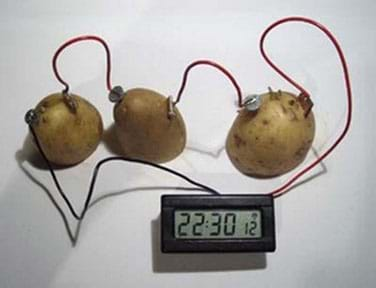 Three potato batteries in series, connected by wires.