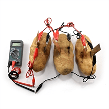 Three potato batteries in parallel, connected by wires.