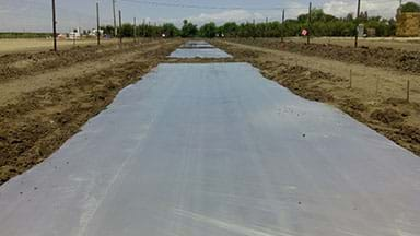 A photograph shows an agricultural field of unplanted brown soil covered with a whitish transparent plastic tarp.