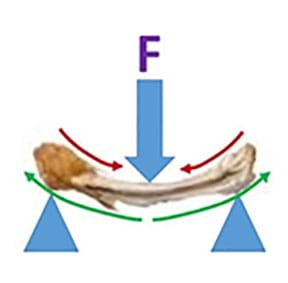 A chicken bone is supported on each end while a load is applied from the top pressing down on the center.