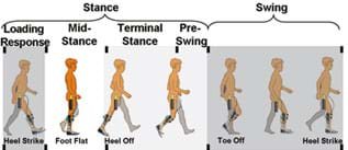 A diagram shows one complete cycle of the human walking gait illustrated by seven side views of a walking child at different stance and swing phases in his gait: loading response, mid-stance, terminal stance and pre-swing. Points of heel strike, foot flat, heel off, and toe off are noted.