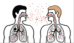 Cutaway drawings of two people standing side by side with particles from one person's sneeze being breathed into the nose and lungs of the other person.