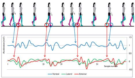 A diagram shows 12 side views of a walking woman above an acceleration (m/s/s) vs. time graph with circles and arrows mapping heel strikes and toe off stages of the gait cycle to specific points on the graph's lines.
