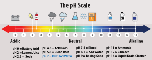 An image shows the pH scale with references to common items.