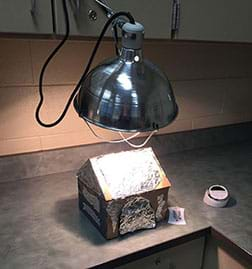 A photograph shows an illuminated clamp lamp positioned above what looks like a small, foil-covered cardboard peaked-roof house on a countertop. Nearby are a thermometer and kitchen timer.