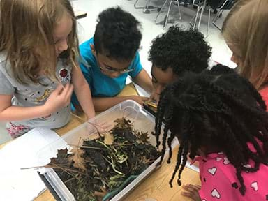 Five students are gathered around their compost bin making observations. The compost bin has a variety of organic material, such as leaves, dirt, and food waste.