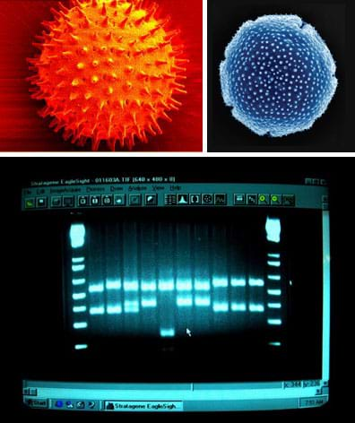 Two images of spherical objects, one orange and spiky, one blue and bumpy. Photo of a computer screen image shows squarish blue blobs on a black background—agarose gel electrophoresis being used to visualize DNA extracts.
