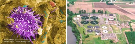 Two photos: A magnified image looks like a big spiky purple blob on a crusty brown background with smaller blue-green, red and white blobs nearby. Aerial photo shows a plant next to farmlands and a river, with many buildings and 14 round, water-filled pools.
