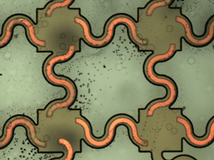 A portion of a printed circuit obtained by overlapping the Figure 5 and 6 masks. Looks like a light background with dark squares connected by snake-shaped curving lines, with all the shapes further outlined by a continuous thin black line.