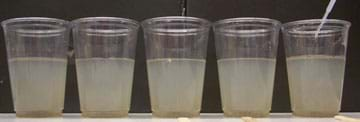 Photo shows five clear plastic cups, each half-filled with the same cloudy brown liquid.