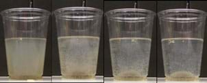 Photo shows four clear plastic cups, each half-filled with a cloudy liquid. In each image, left to right, the liquid is increasingly more clear with a growing brownish-white pile at the bottom of each subsequent cup.