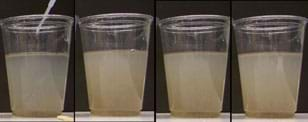 Photo shows four clear plastic cups, each half-filled with a cloudy liquid.