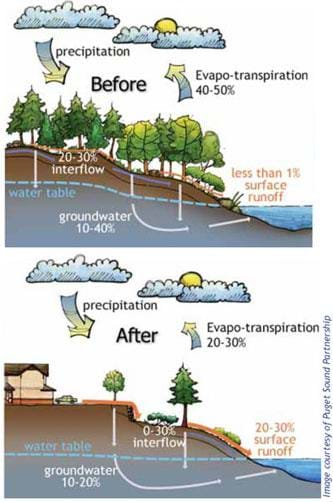 A two-part cutaway landscape diagram compares the water cycle before and after human development. Before, almost all rainfall is taken up by plants, evaporates or infiltrates through the ground. After conventional development (fewer plants and trees, more hard surfaces), surface runoff increases significantly while evaporation and infiltration into the ground decrease.