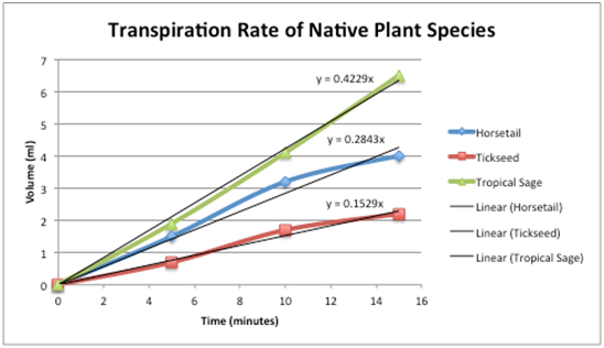 A line graph titled Transpiration Rate of Native Plant Species plots volume (ml) vs. time (minutes) for three native plant species: horsetail (blue), tickseed (red), tropical sage (yellow). Best fit black lines are drawn over each colored line plot made from three data points. Slopes for red (y=0.1529x), blue (y=0.2843x) and yellow (y=0.4229x, steepest).