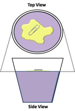 A line drawing shows top and side views of a paper clip on an irregular blob on the surface of a liquid in a cup.