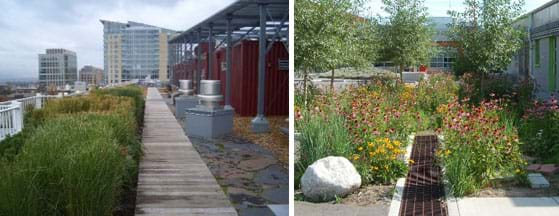 Two photographs: Foreground shows lush grasses, fencing and vents on a rooftop, with other multi-storied buildings in the background. Near a building and asphalt/concrete parking lot, a green area with purple and yellow flowers and some trees surrounds a long grate.