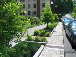 A photograph shows a line of cars parked on a street with concrete curbed planter boxes between the cars and the sidewalk, filled with plants and trees.