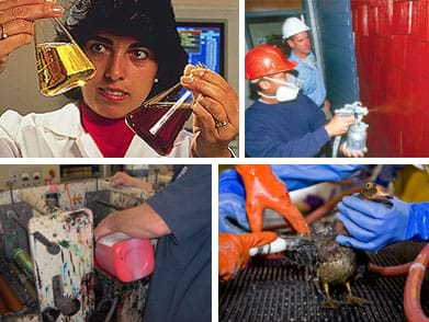 Four photos: A woman in a lab with two vials of fluids. Two men spray paint a wall. A man pours paint into a printing press. Gloved hands clean a wood duck that was caught in an oil spill.