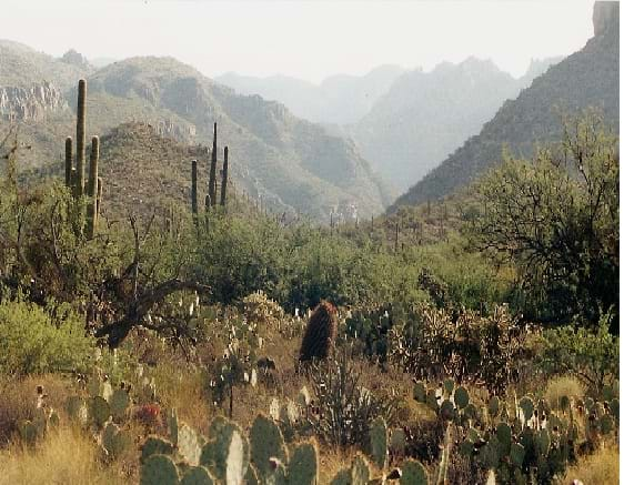 A photograph of the Sonoran Desert landscape shows rugged mountains, scrubby bushes and tall, multi-armed cacti.