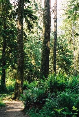 Photograph shows a trail leading into a lush green forest with ferns and tall trees.