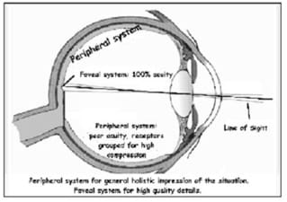 A side view cutaway diagram shows an eyeball with labels indicating central and peripheral vision. Peripheral system: poor acuity, receptors grouped for high compression. Foveal system: 100% acuity. Peripheral system for general holistic impression of the situation. Foveal system for high-quality details.