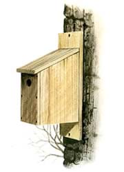 Drawing shows a small wooden box with a slanted roof and a hole on the side, affixed to the side of a tree.