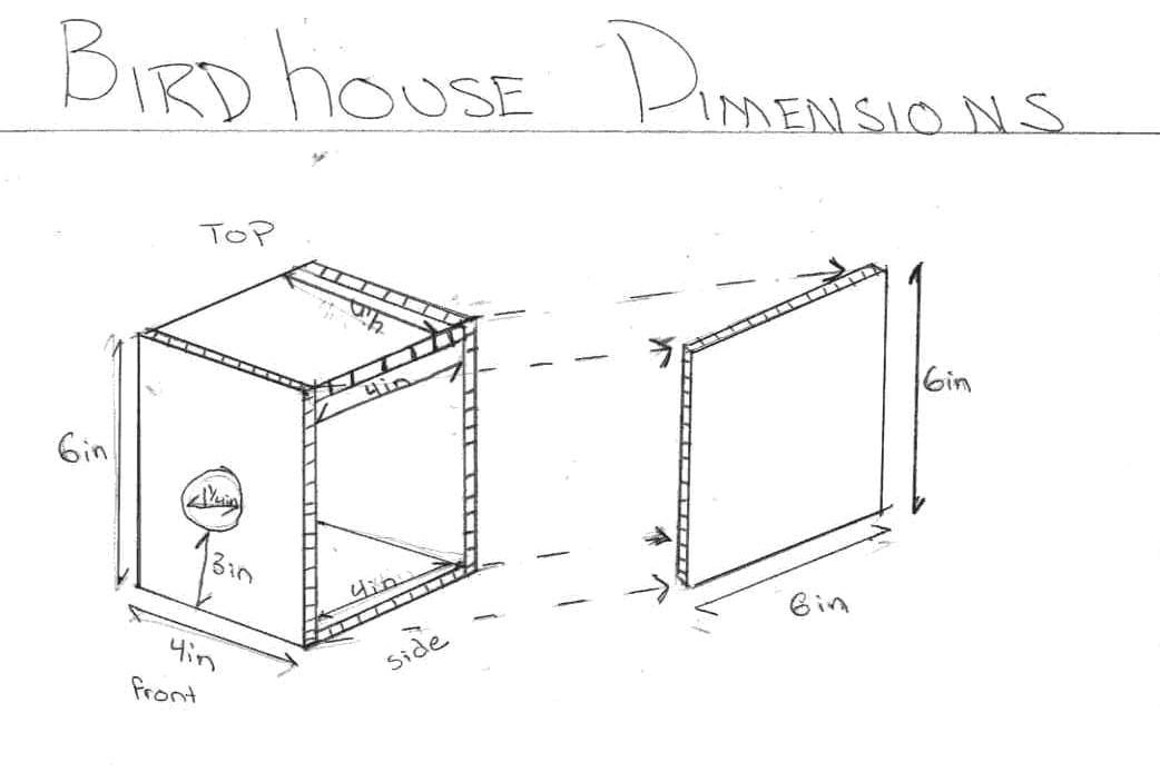 Oriole bird house plans pdf woodworking for Song bird house plans