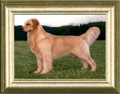 Image shows a photo of a posing dog in a gold picture frame.