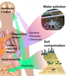 A diagram shows a human body silhouette with major internal organs drawn inside, surrounded by images of various forms of pollution: waste pipes indicating water pollution (bacteria, parasites, chemicals) and industry and farming contributing to soil contamination (pesticides). Arrows point to the body, indicating consequences such as headaches, fatigue, cardiovascular illness, gastroenteritis, cancer risk, nausea and skin irritation.
