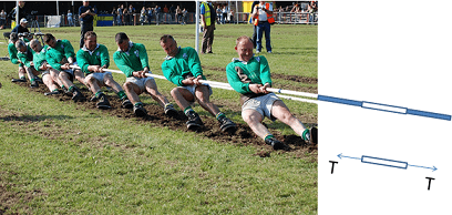 A photo shows a tug of war team of ~10 men with their heels dug in, pulling hard on a rope, creating a pulling (tension) force. Extending from the rope in the photo, a line drawing shows the rope elements and a free body diagram of one rope segment.