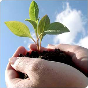 Photo shows two hands holding a seedling plant in soil.